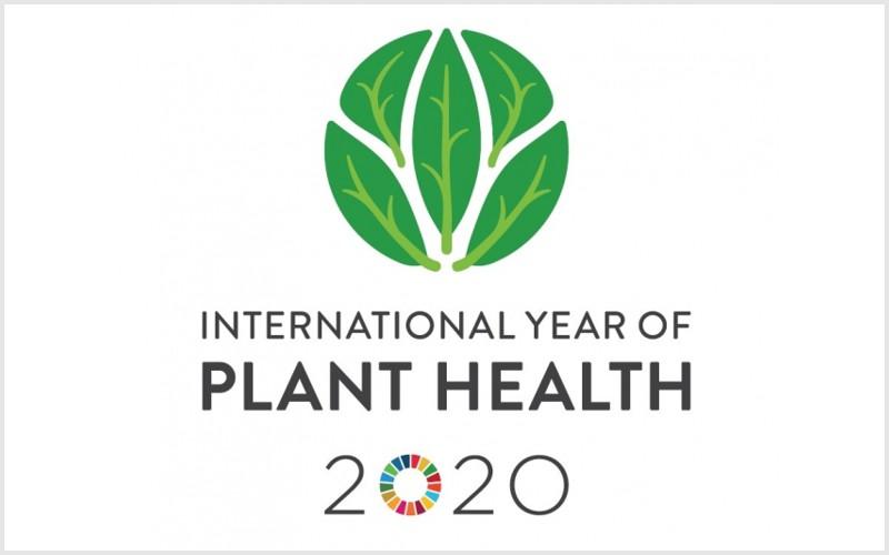 ONU: 2020 Ano Internacional da Fitossanidade para melhor protecção contra pragas vegetais